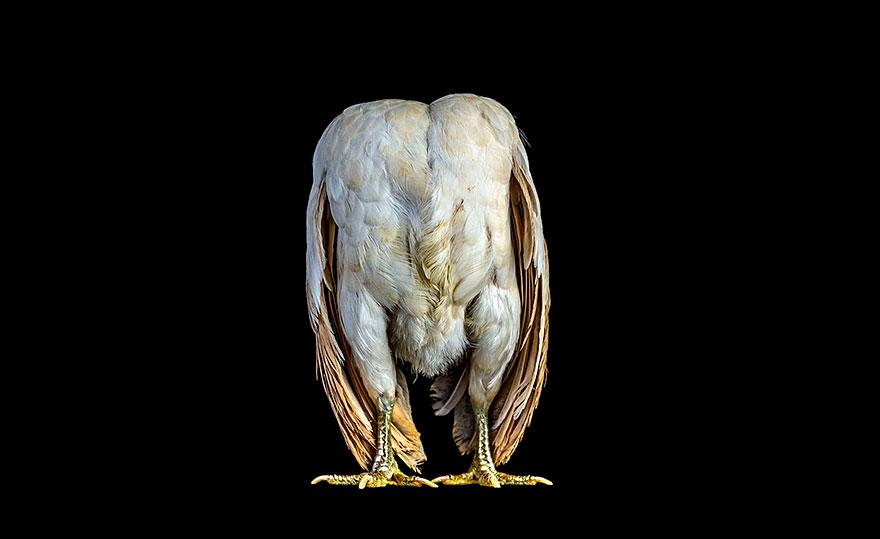 ayam-seramas-chicken-photography-ernest-goh-6