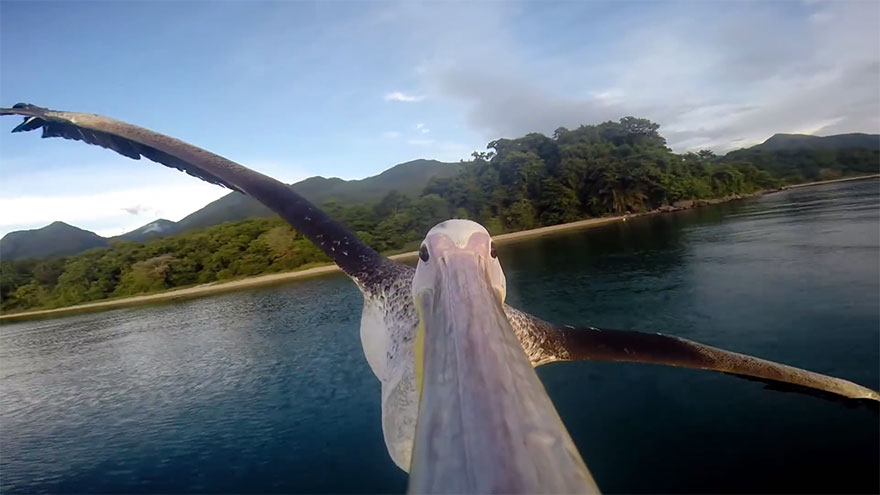 big-bird-pelican-gopro-greystoke-mahale-tanzania-3