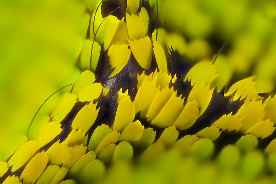 butterfly-wing-macro-photography-linden-gledhill-7