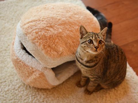 cat-burger-bed-maru-4
