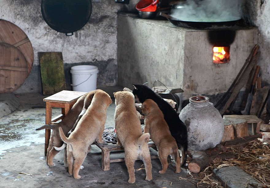 cute-puppies-barking-cold-stove-5