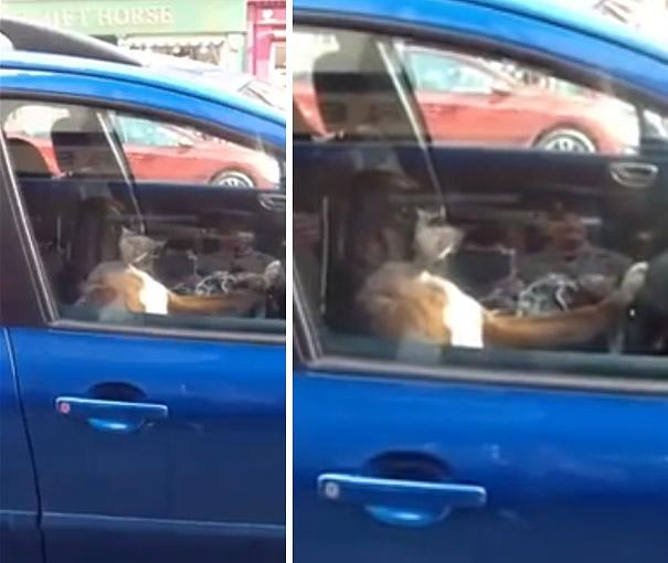 dog-honking-car-horn-2