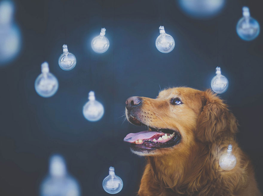 dog-photography-chuppy-golden-retriever-jessica-trinh-17