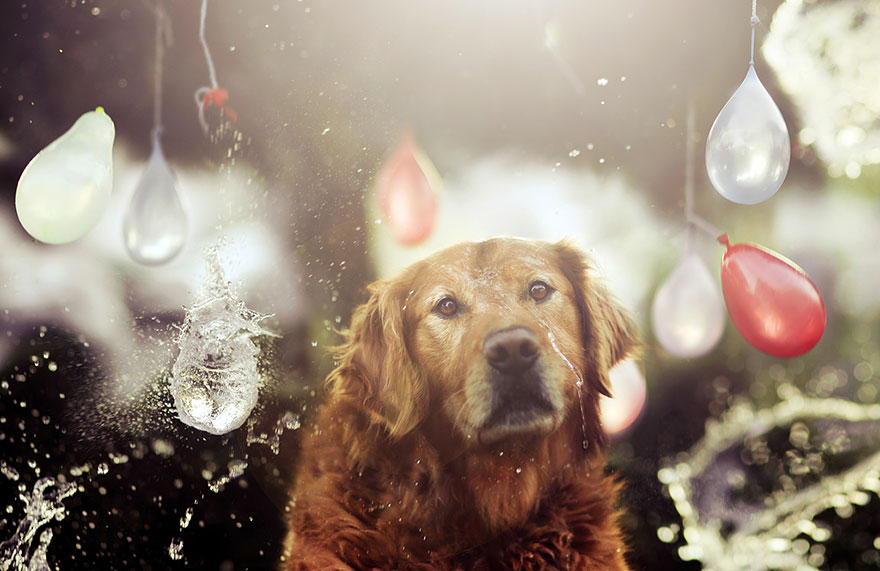 dog-photography-chuppy-golden-retriever-jessica-trinh-20
