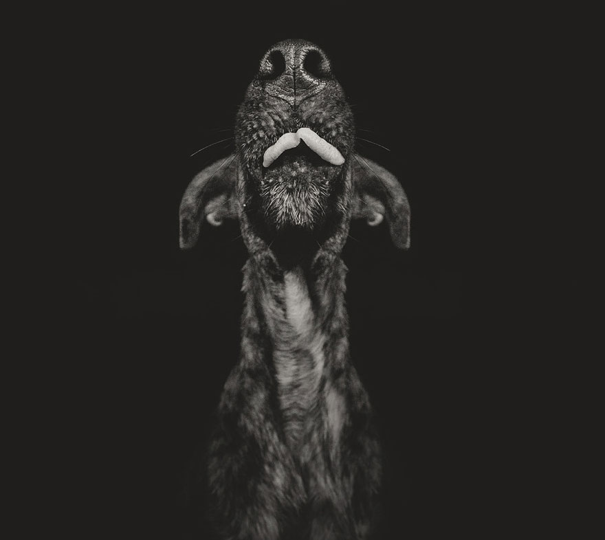 dog-portrait-photography-elke-vogelsang-10