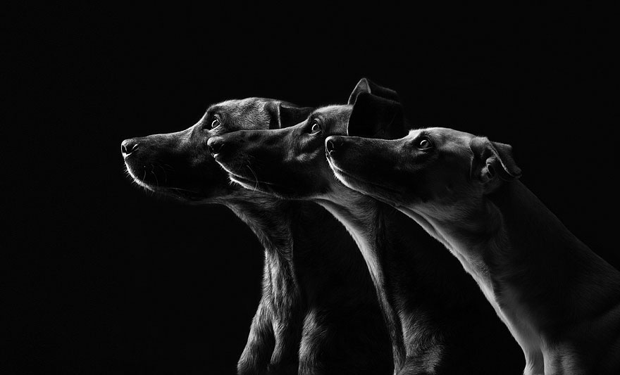 dog-portrait-photography-elke-vogelsang-11