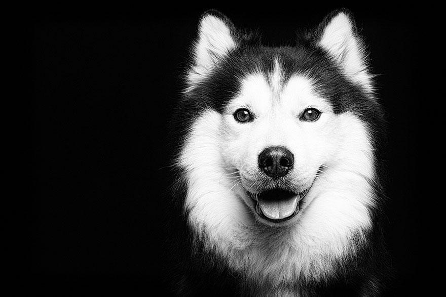 dog-portrait-photography-elke-vogelsang-12
