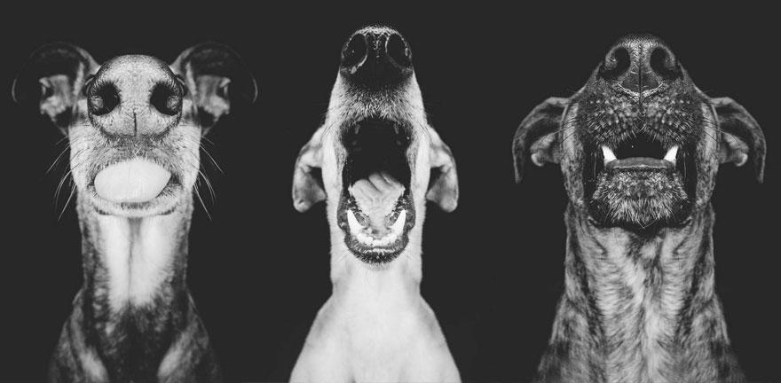 dog-portrait-photography-elke-vogelsang-2