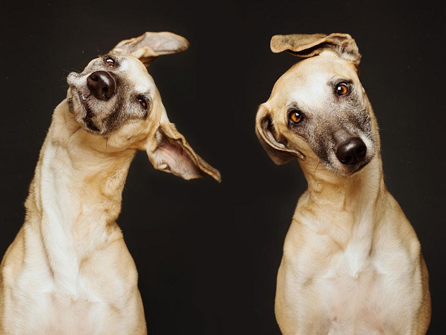 dog-portrait-photography-elke-vogelsang-28