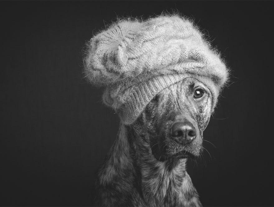 dog-portrait-photography-elke-vogelsang-9