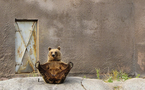 funny-bears-doing-human-things-14