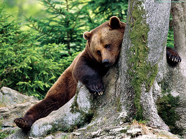 funny-bears-doing-human-things-20
