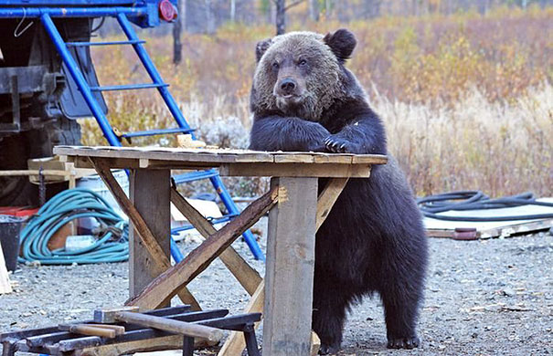 funny-bears-doing-human-things-30
