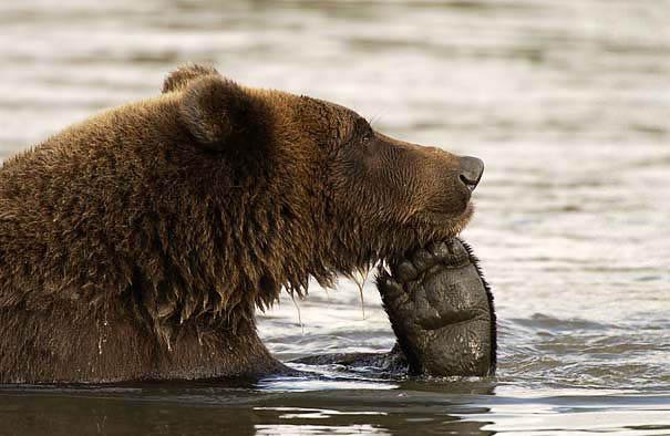 funny-bears-doing-human-things-35