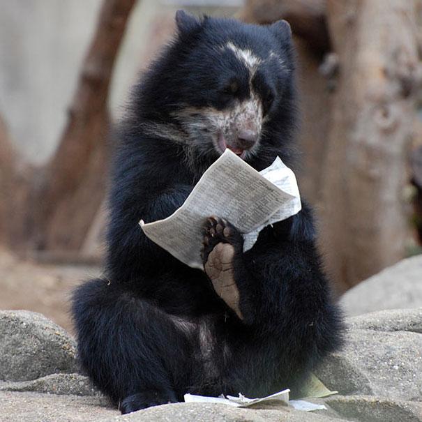 funny-bears-doing-human-things-8