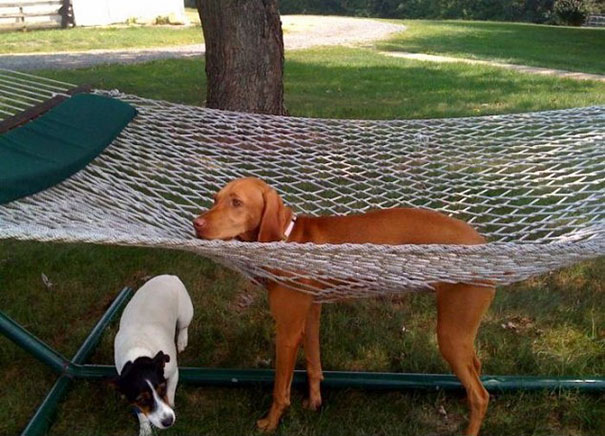 funny-cats-dogs-stuck-furniture-9.jpg