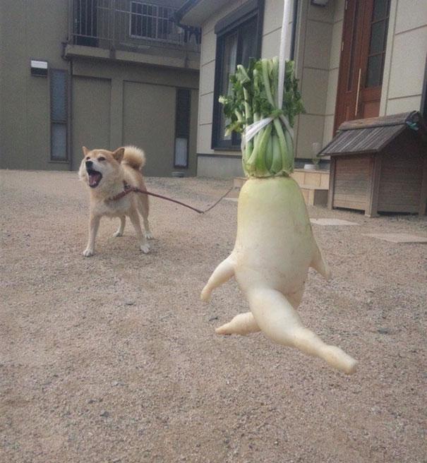 Foto Buah Dan Sayuran Berbentuk Lucu 15