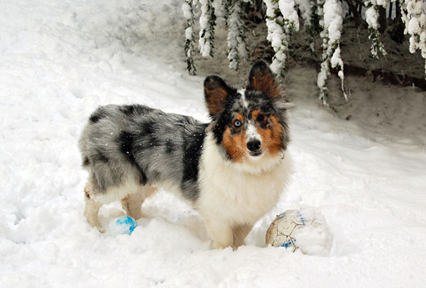 mixed-breed-dogs-18