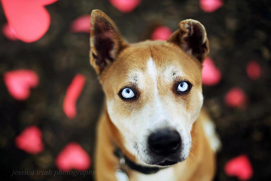 shelter-dog-photos-let-it-rain-love-jessica-trinh-1