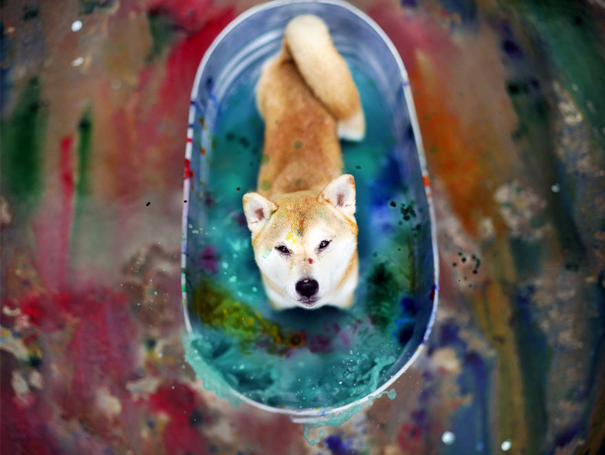 shelter-dog-photos-let-it-rain-love-jessica-trinh-33