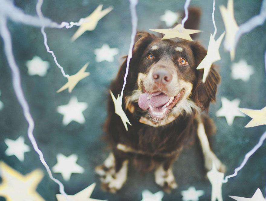 shelter-dog-photos-let-it-rain-love-jessica-trinh-34
