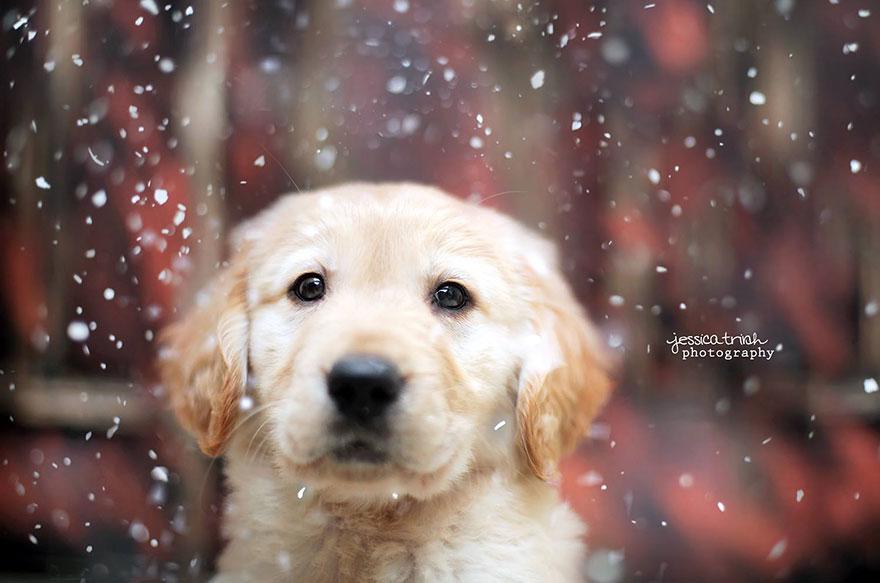 shelter-dog-photos-let-it-rain-love-jessica-trinh-35