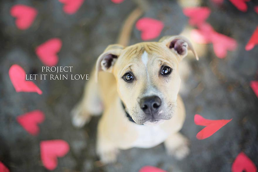 shelter-dog-photos-let-it-rain-love-jessica-trinh-5