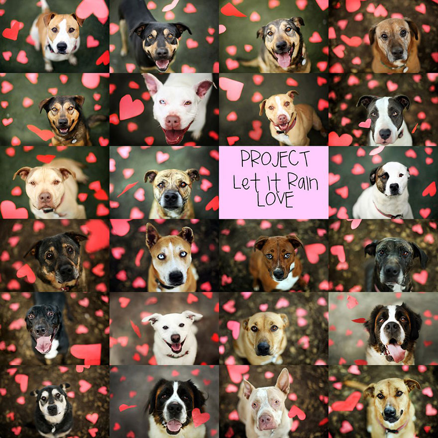 shelter-dog-photos-let-it-rain-love-jessica-trinh-7
