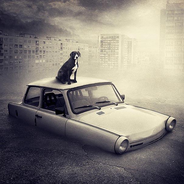 surreal-photoshop-images-shelter-animals-sarolta-ban-3