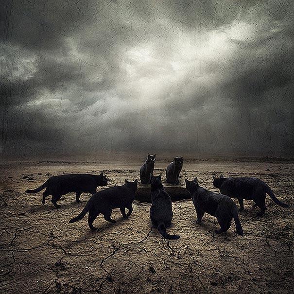 surreal-photoshop-images-shelter-animals-sarolta-ban-6