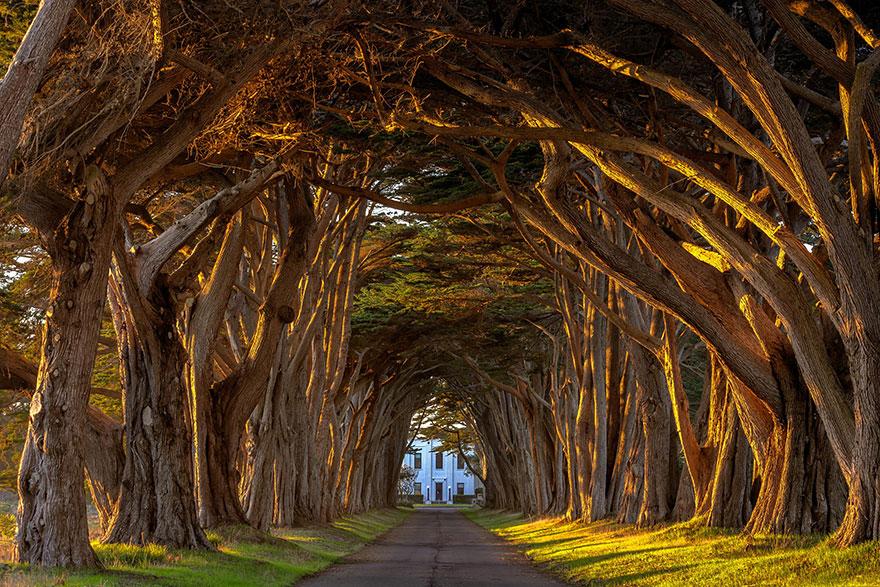amazing-tree-tunnels-20