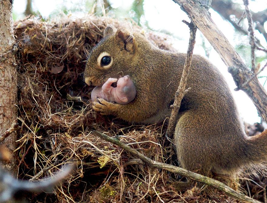 http://www.boredpanda.com/cute-animal-parenting/?image_id=animal-parents-14.jpg