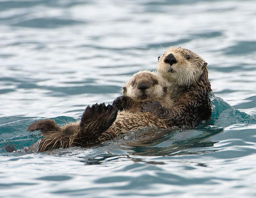 http://www.boredpanda.com/cute-animal-parenting/?image_id=animal-parents-17.jpg