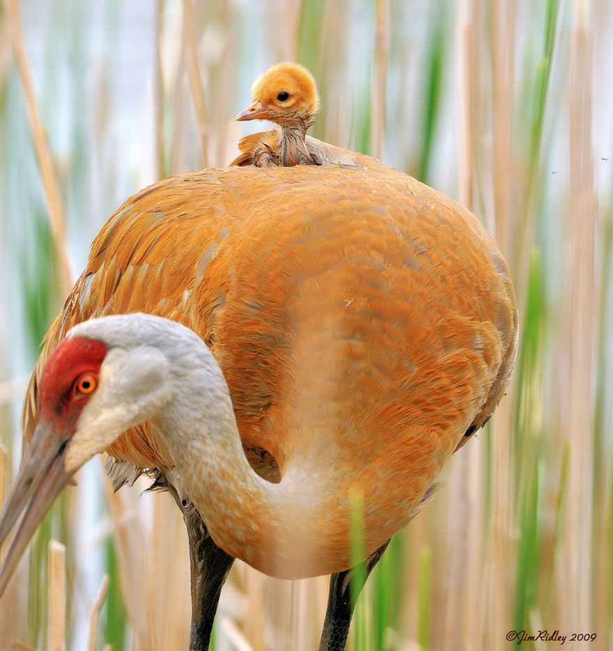 http://www.boredpanda.com/cute-animal-parenting/?image_id=animal-parents-20.jpg