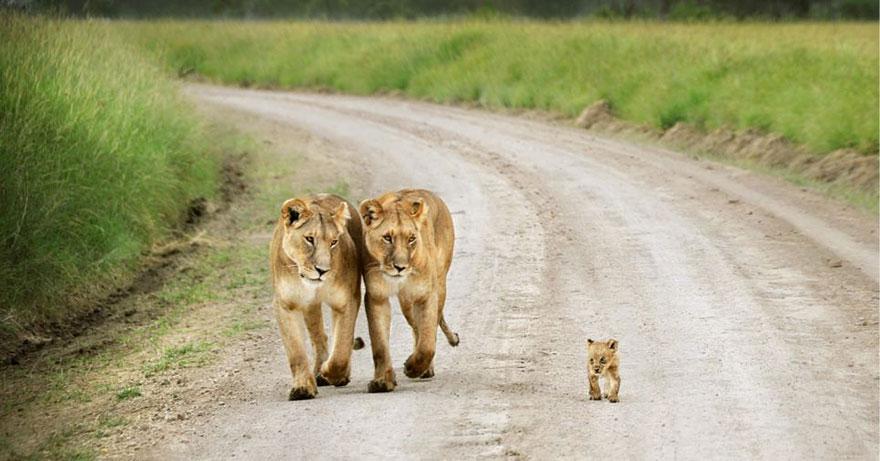http://www.boredpanda.com/cute-animal-parenting/?image_id=animal-parents-23.jpg