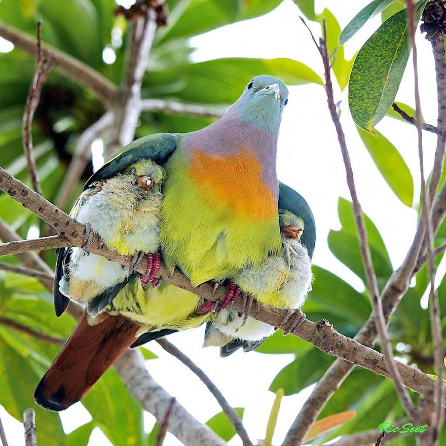 http://www.boredpanda.com/cute-animal-parenting/?image_id=animal-parents-4.jpg