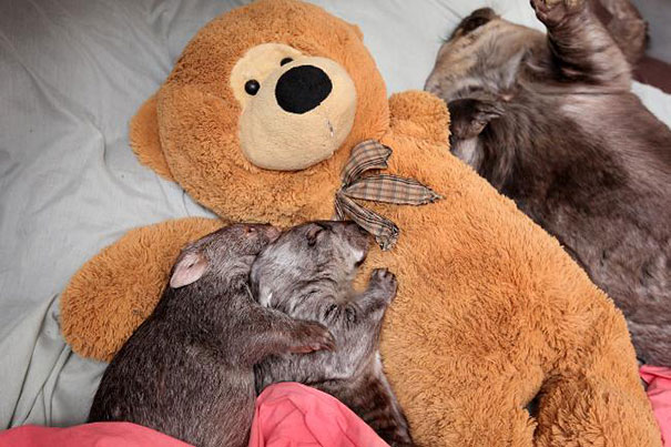 cute-animals-sleeping-stuffed-toys-13