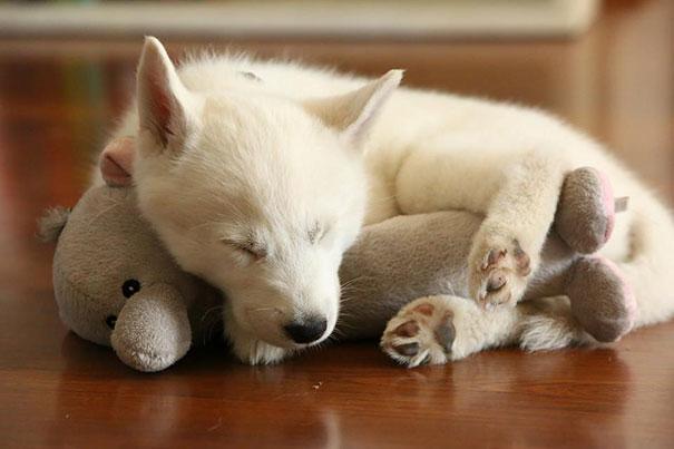 cute-animals-sleeping-stuffed-toys-17