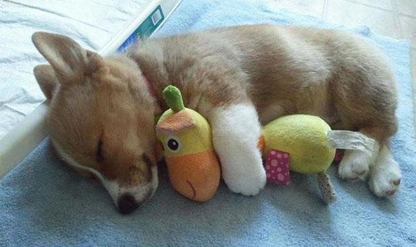 cute-animals-sleeping-stuffed-toys-41