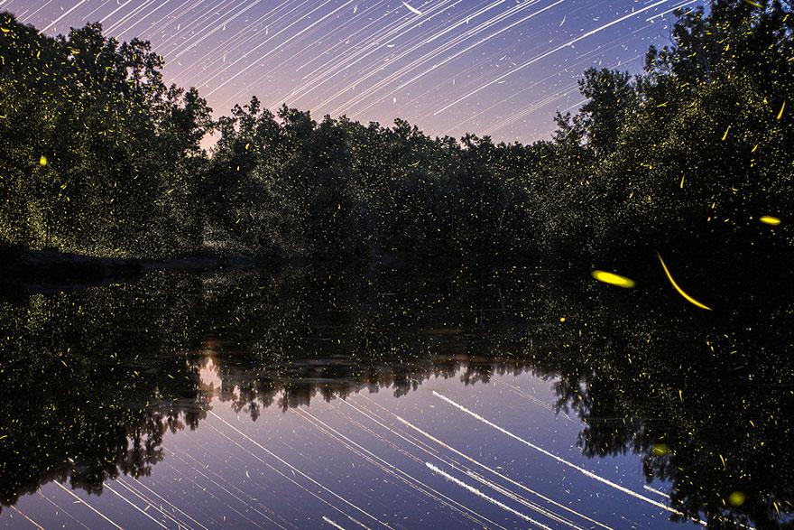 fireflies-time-lapse-photography-vincent-brady-1
