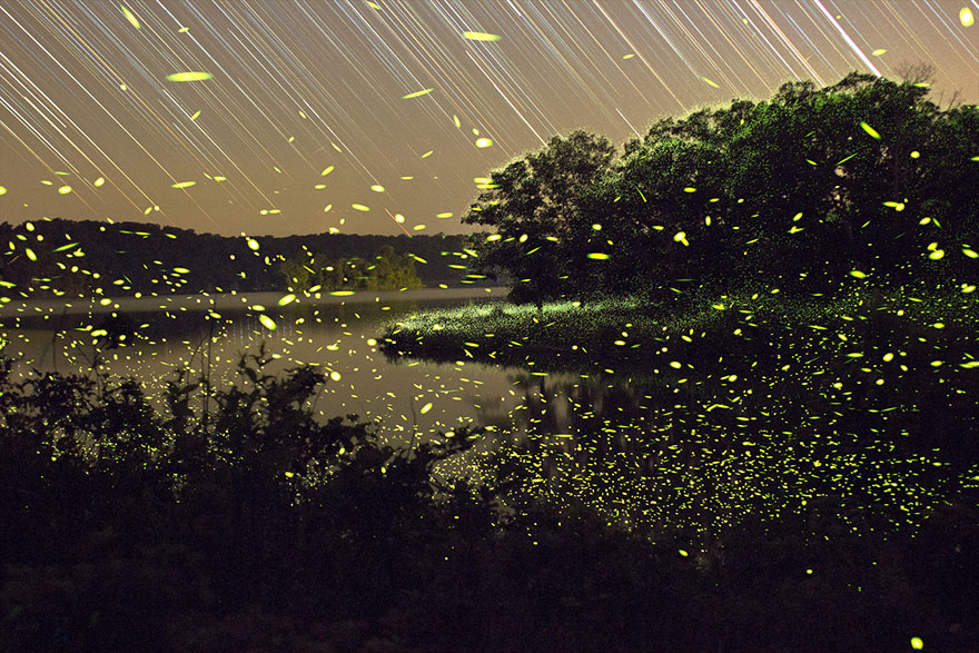fireflies-time-lapse-photography-vincent-brady-4