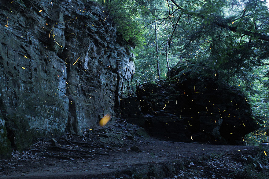 fireflies-time-lapse-photography-vincent-brady-7