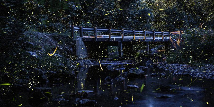fireflies-time-lapse-photography-vincent-brady-8
