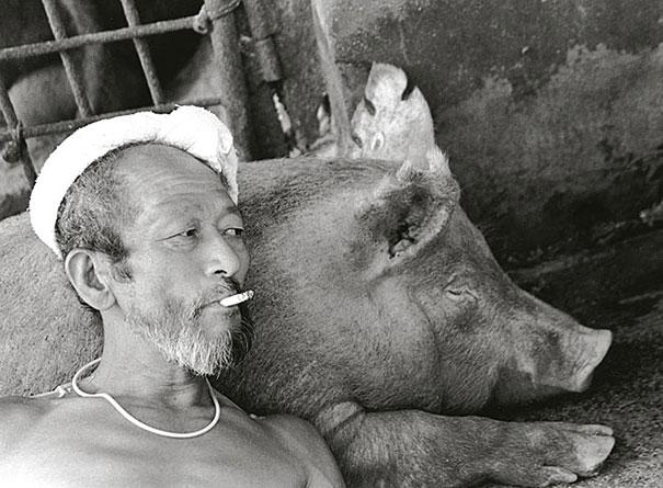 otchan-cute-pig-farmer-toshiteru-yamaji-5