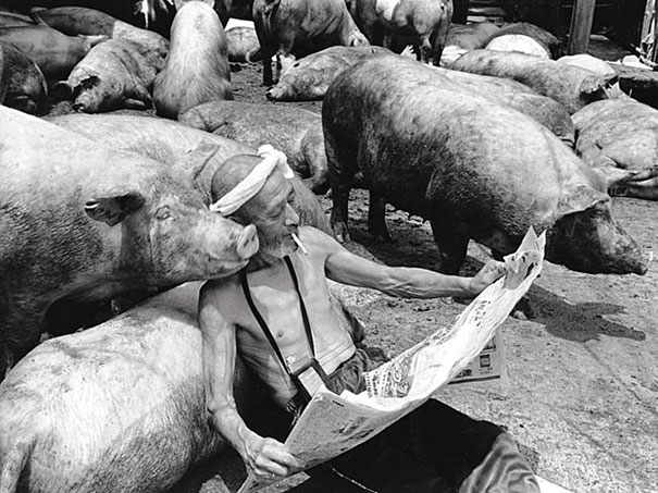 otchan-cute-pig-farmer-toshiteru-yamaji-7