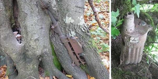 ww2-weapons-helmets-stuck-in-trees-6