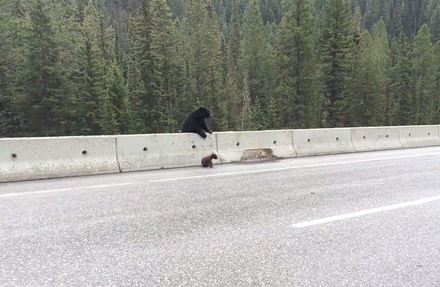 bear-cub-rescue-video-ricky-forbes-1