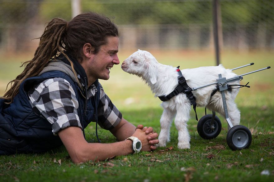 frostie-snow-goat-wheelchair-edgars-mission-1