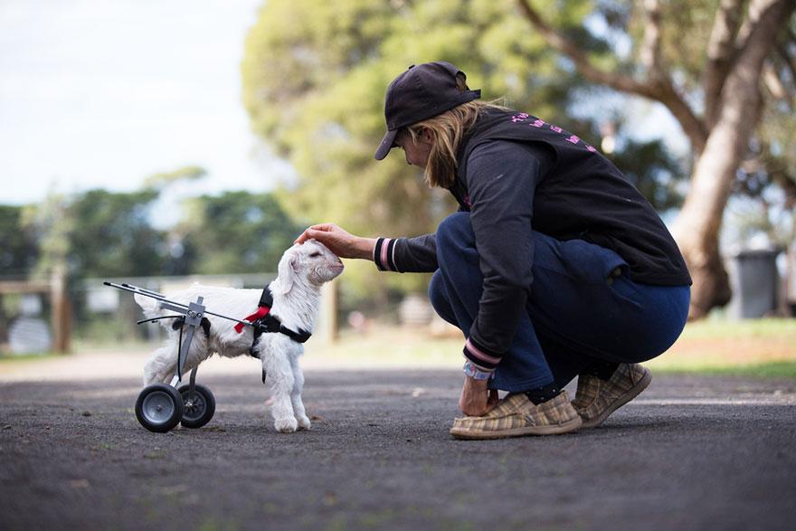 frostie-snow-goat-wheelchair-edgars-mission-4