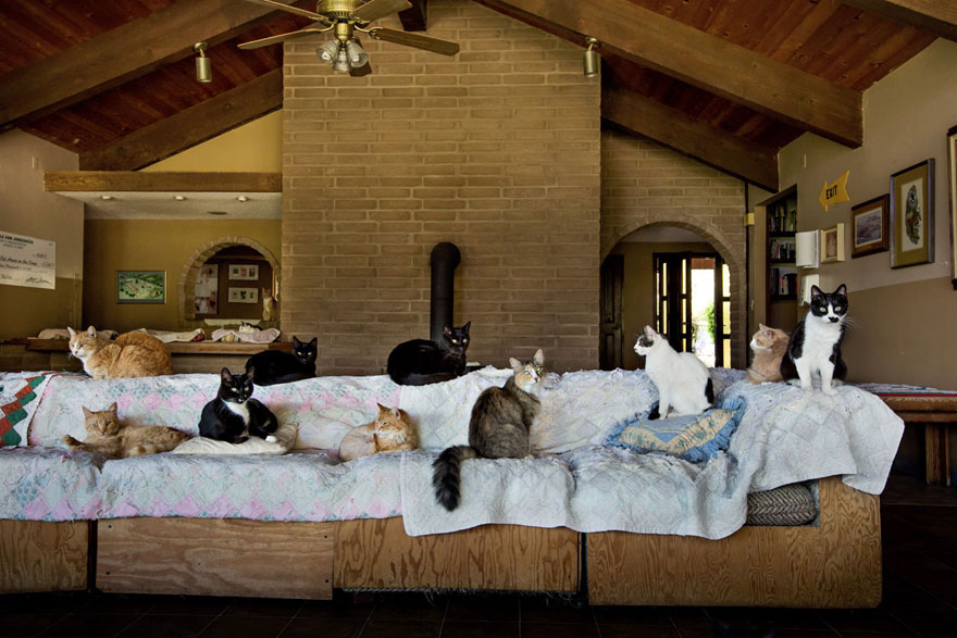 largest-cat-sanctuary-shelter-lynea-lattanzio-12